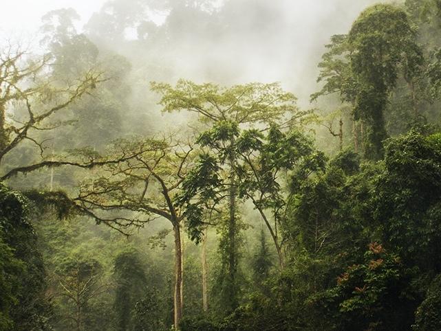 Verrassend Het tropisch regenwoud van Sumatra (foto's)   In de Archipel OV-47