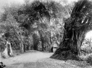 De grote postweg bij Probolinggo