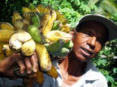 Een bananenboer op het eiland Flores (Oost-Nusa Tenggara)