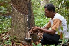 Een man verzamelt rubber in de provincie Riau