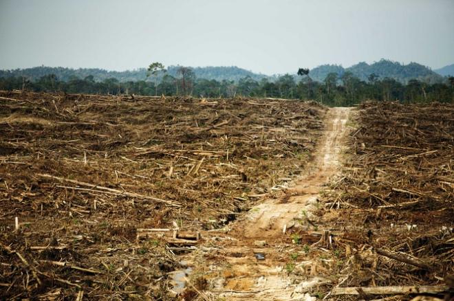 In 1950 was bijna het gehele eiland Borneo bedekt met oerwouden. Van het bos is nog maar ongeveer een kwart over, vooral in het Hart van Borneo rond de Maleisisch-Indonesische grens. Deskundigen verwachten dat het eiland in 2020 voor ongeveer 90% ontbost is. Doelen van de ontbossing zijn de houtkap en de aanleg van akkers en plantages.