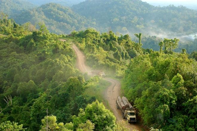 Als er geen betere controles komen dan verdwijnt het gehele tropische regenwoud van Borneo, zoals op deze foto in Oost-Kalimantan. De Indonesische en Maleisische overheid zijn samen met buitenlandse organisaties aan het proberen de oerbossen te beschermen, maar de economische belangen van grote bedrijven lijken vaak sterker.