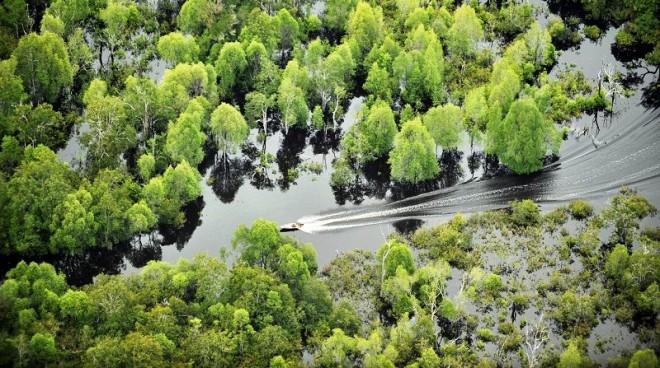 Het nationaal park Danau Sentarum in West-Kalimantan. Het park is een merengebied met zo'n twintig meren en moerasbossen. De meren maken onderdeel uit van het stroomgebied van de Kapuas, de langste rivier van Indonesië.