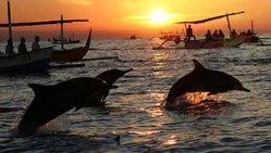 lovina-dolfijnen