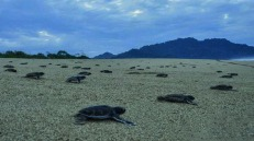 schildpadden-sukamade