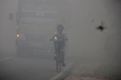 Rook Kalimantan