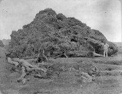 Koraal bij Anjer Krakatau